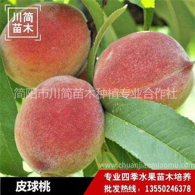 皮球桃树苗